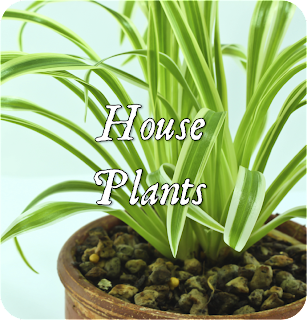 https://sites.google.com/site/sunfoxgardens/products-services/HousePlants_button.png